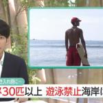 日本でのサメの事故や事件被害状況 危険な鮫の生息地と種類(画像)
